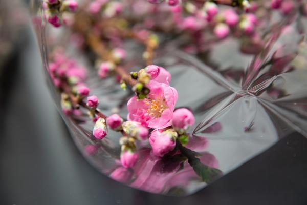 奥久慈の花桃