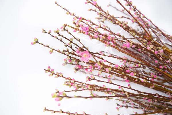 奥久慈の花桃7