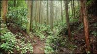 小瀬富士・小舟富士ハイキングコース03