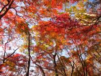 上山ハイキングコース05
