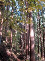 上山ハイキングコース07