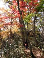 上山ハイキングコース15