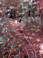 上山ハイキングコース20