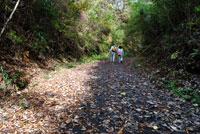 御前山ハイキングコース16