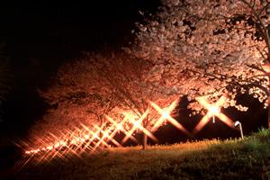 辰ノ口さくら祭り02