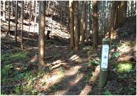尺丈山ハイキングコース05