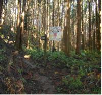 尺丈山ハイキングコース07